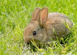 Shoot the lil bunny rabbit?
