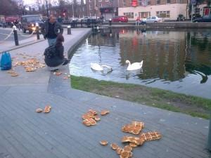 swan-mystery